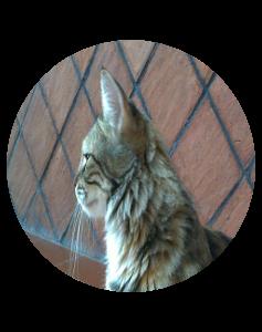 Linfoma nel gatto, Linfoma gatto terapia di supporto e Microimmunoterapia