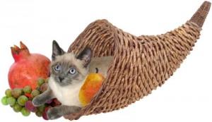 Alimentazione e tumore nel gatto